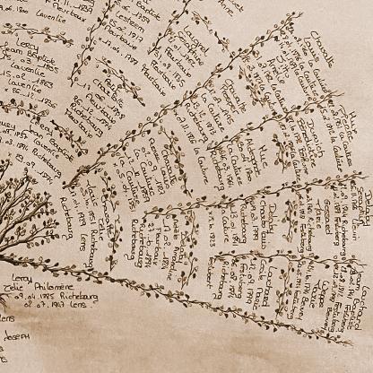 Canopée Généalogique Calligraphie